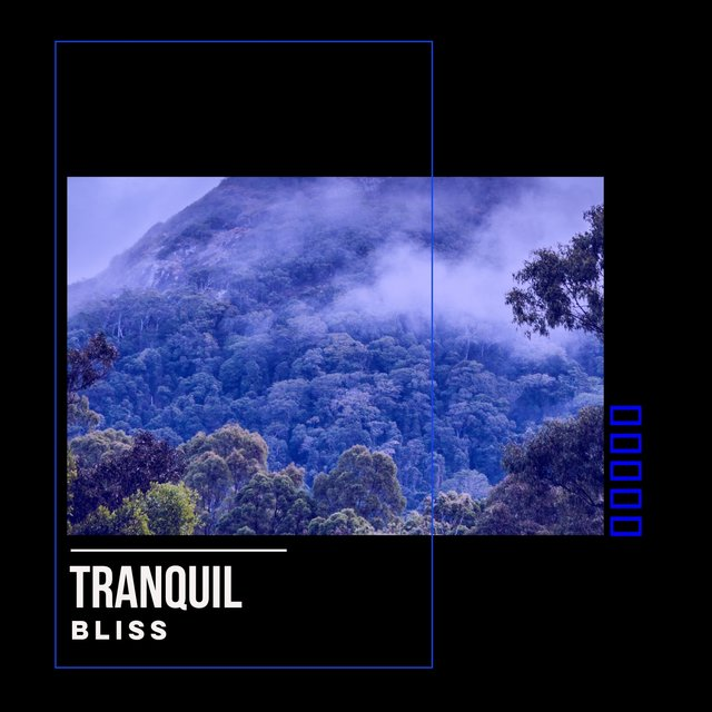 # 1 Album: Tranquil Bliss
