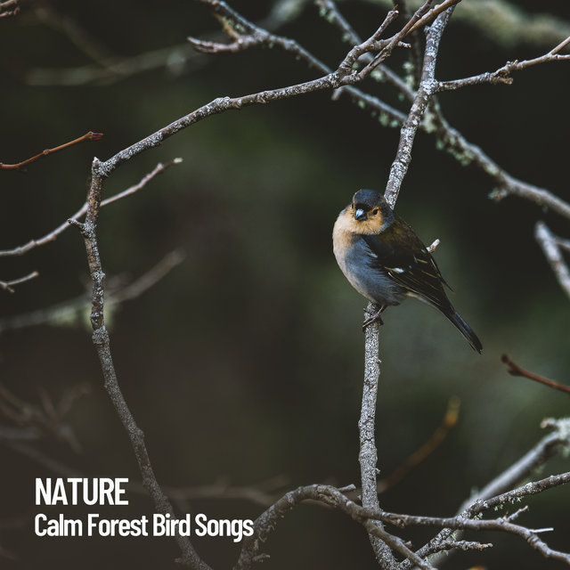 Nature: Calm Forest Bird Songs