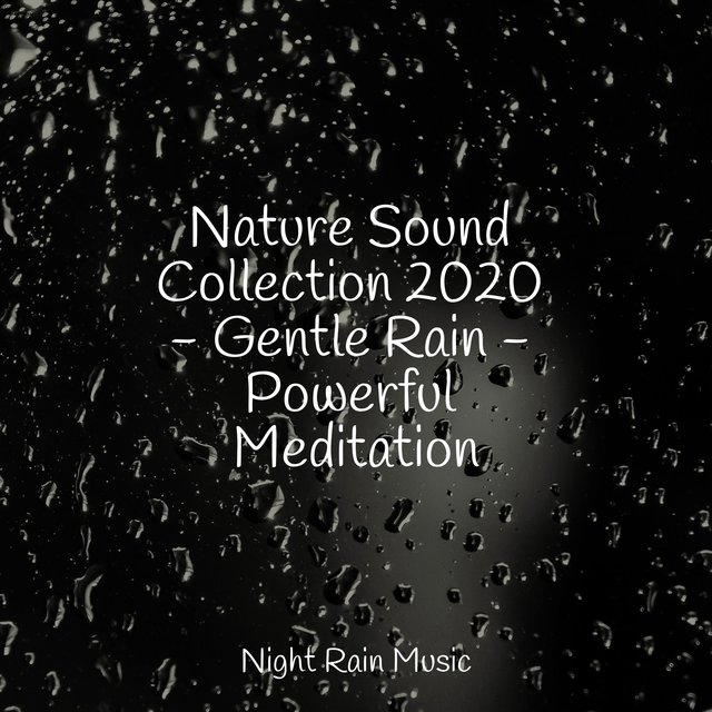 Nature Sound Collection 2020 - Gentle Rain - Powerful Meditation