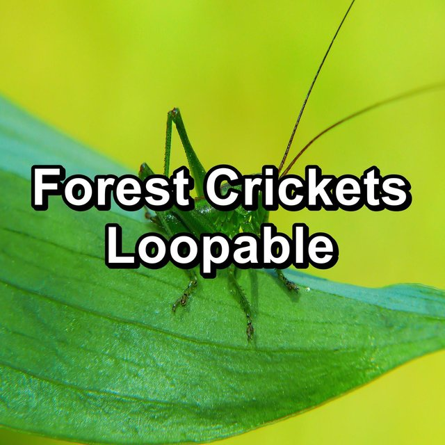 Forest Crickets Loopable