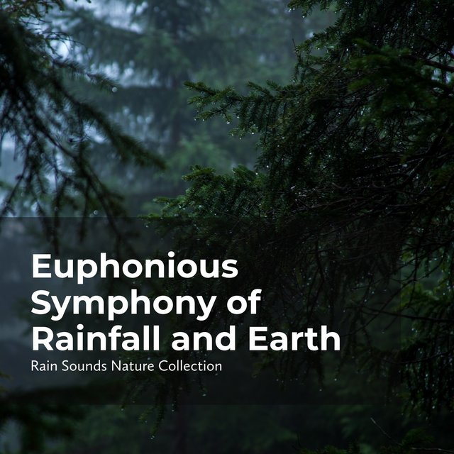 Euphonious Symphony of Rainfall and Earth