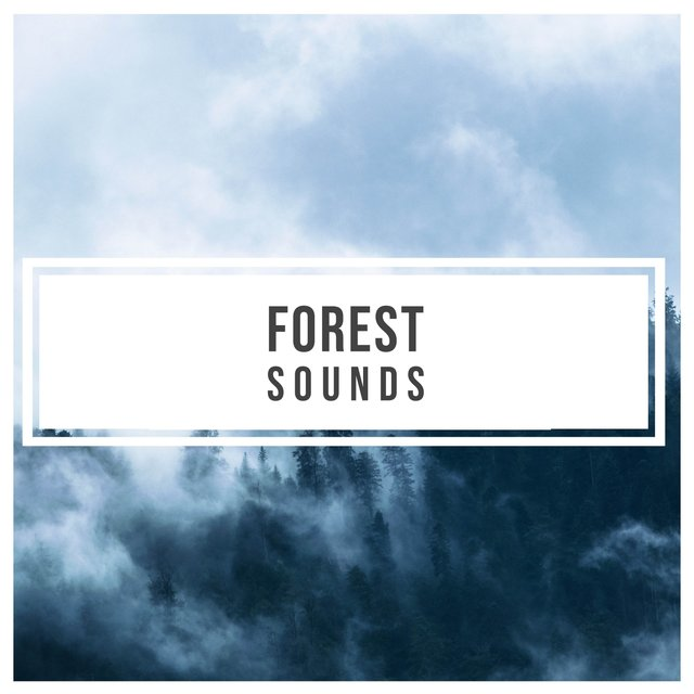 Mellow Garden Forest Sounds