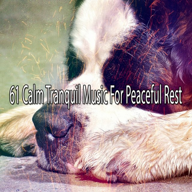 61 Calm Tranquil Music for Peaceful Rest