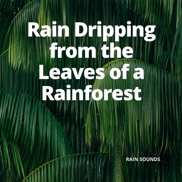 Rain Dripping from the Leaves of a Rainforest