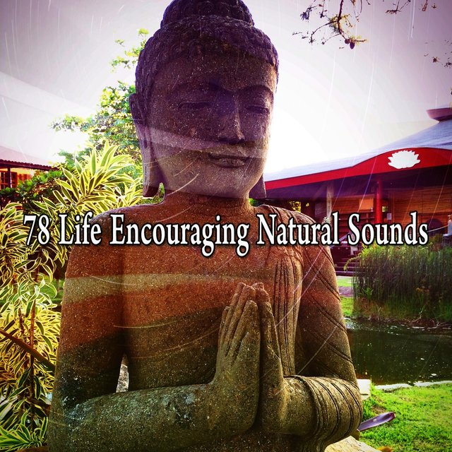 78 Life Encouraging Natural Sounds