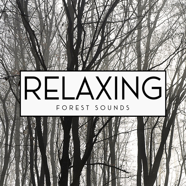 Relaxing Forest Sounds - Keep Calm with Nature Sounds, Water, Rain, Wind, Birds, Deep Relaxation, Ambient Streams, Time for You, Positive Energy