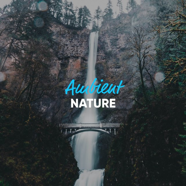 Gentle Ambient Nature Pieces