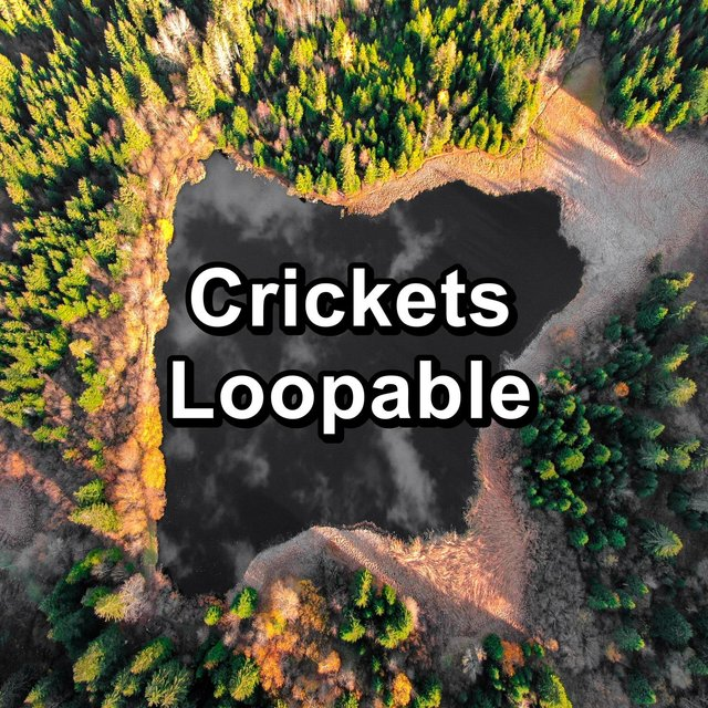 Crickets Loopable