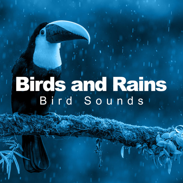 Birds and Rains