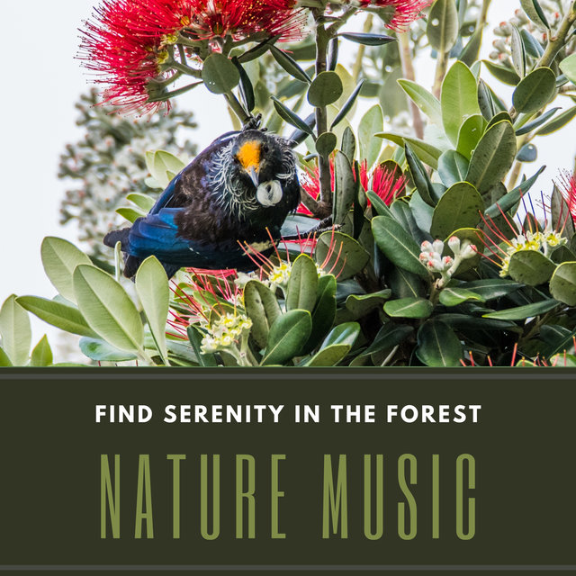 Find Serenity in the Forest – Calming Antistress Music for Healing, Therapeutic Sounds (Birds, Water, Instruments), Embrace Nature