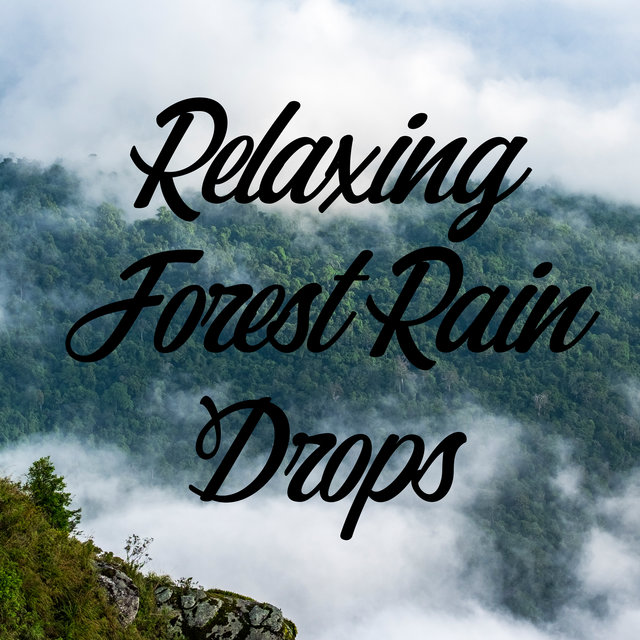 Relaxing Forest Rain Drops