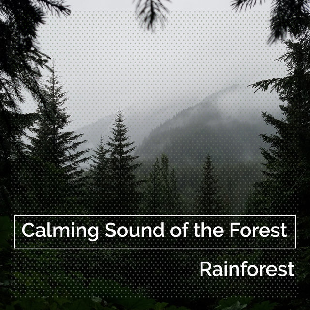 Calming Sound of the Forest
