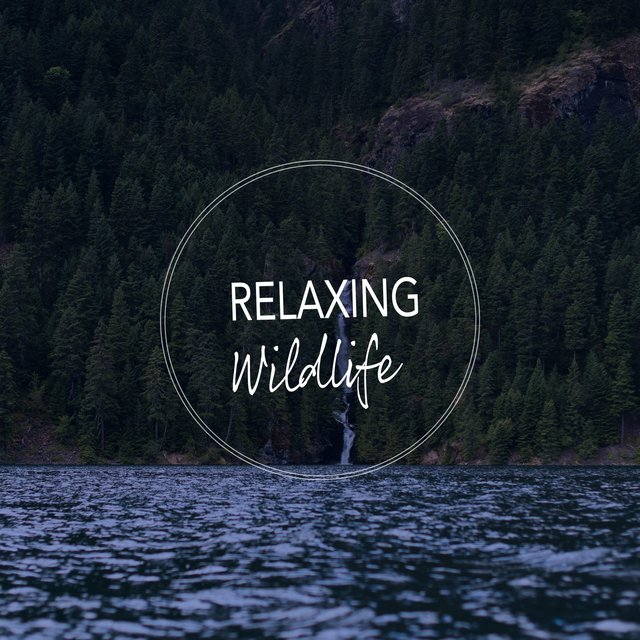 Relaxing Ambient Wildlife Playlist