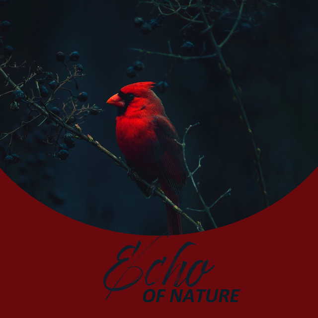 Echo of Nature: Nature White Noise🌿 (Woodland Birds, Forest Stream, Nature at Night, Rain Sounds)