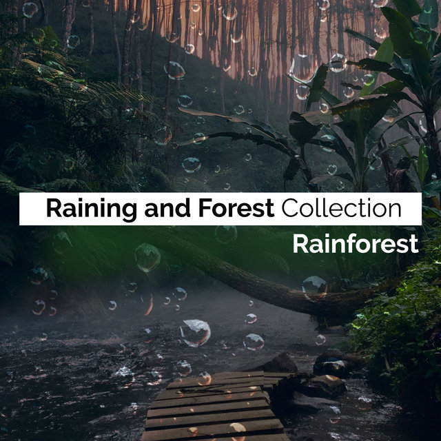 Raining and Forest Collection