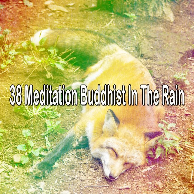 38 Meditation Buddhist in the Rain