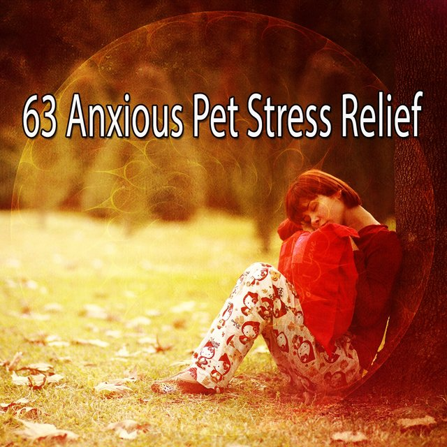 63 Anxious Pet Stress Relief
