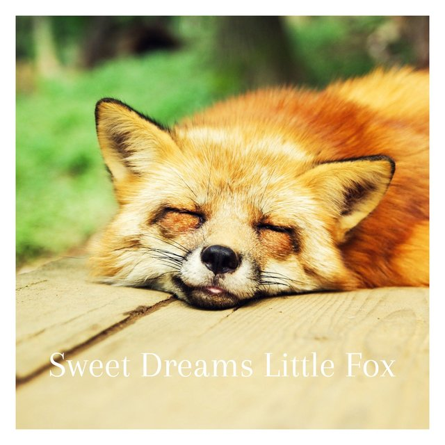 Sweet Dreams LIttle Fox