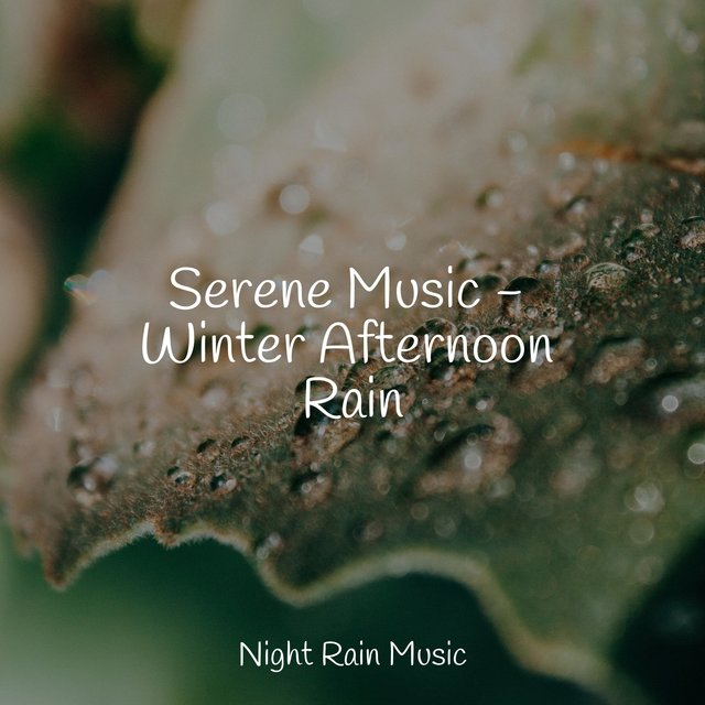 Serene Music - Winter Afternoon Rain