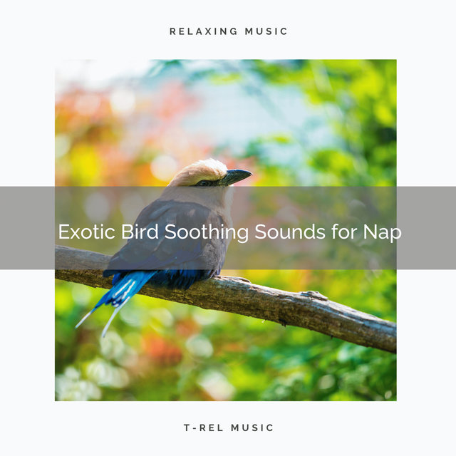 2021 New: Exotic Bird Soothing Sounds for Nap