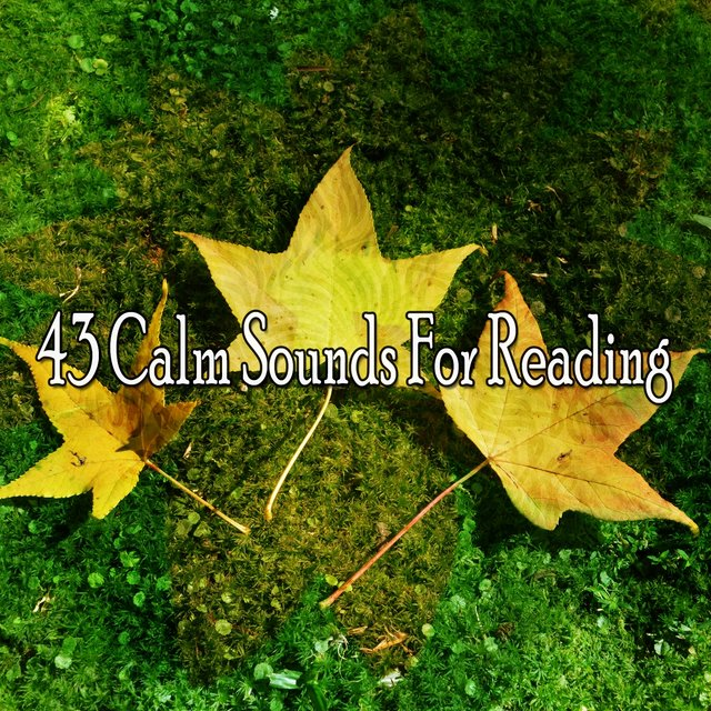43 Calm Sounds for Reading