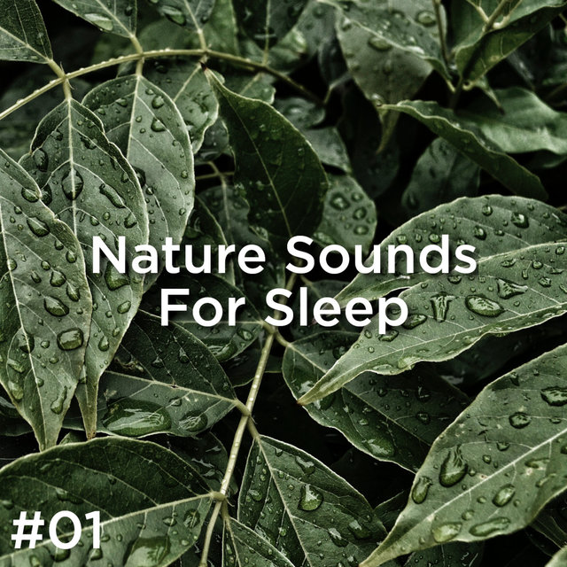 #01 Nature Sounds For Sleep