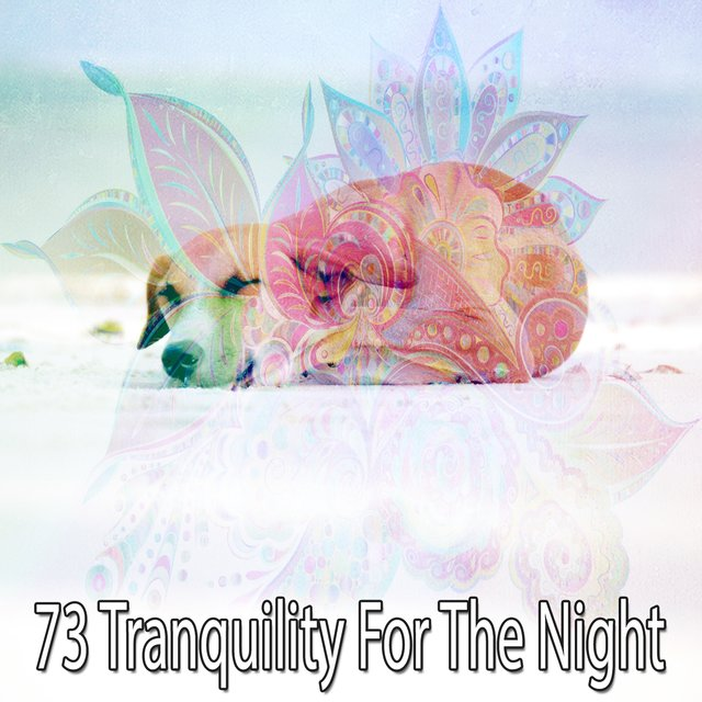 73 Tranquility for the Night