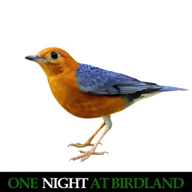One Night at Birdland (Live)