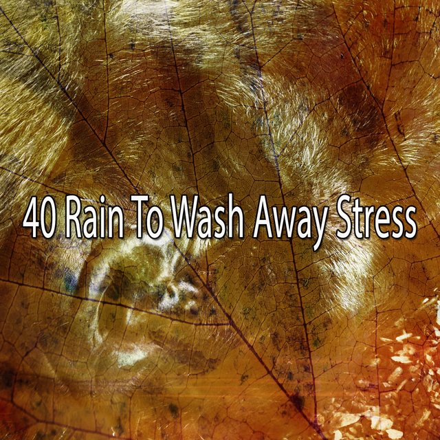 40 Rain to Wash Away Stress