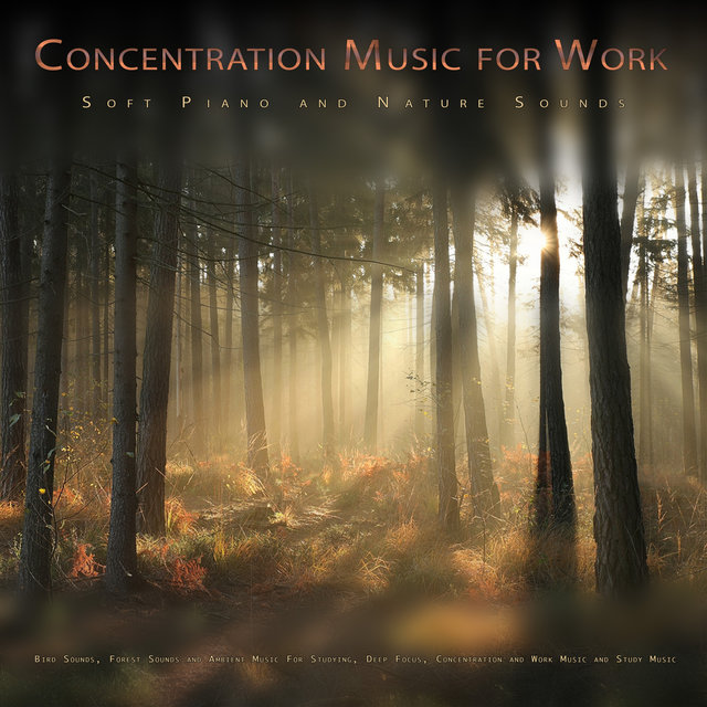 Concentration Music for Work: Soft Piano and Nature Sounds, Bird Sounds, Forest Sounds and Ambient Music For Studying, Deep Focus, Concentration and Work Music and Study Music