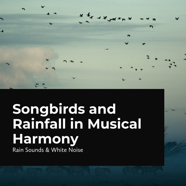 Songbirds and Rainfall in Musical Harmony