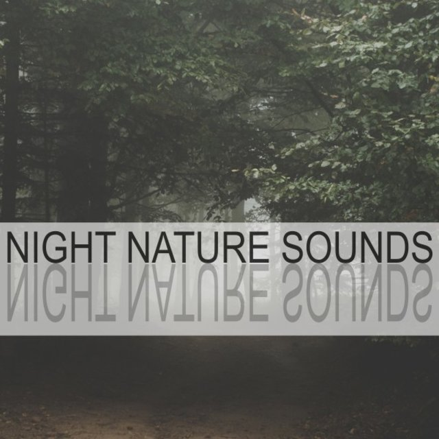 Night Nature Sounds