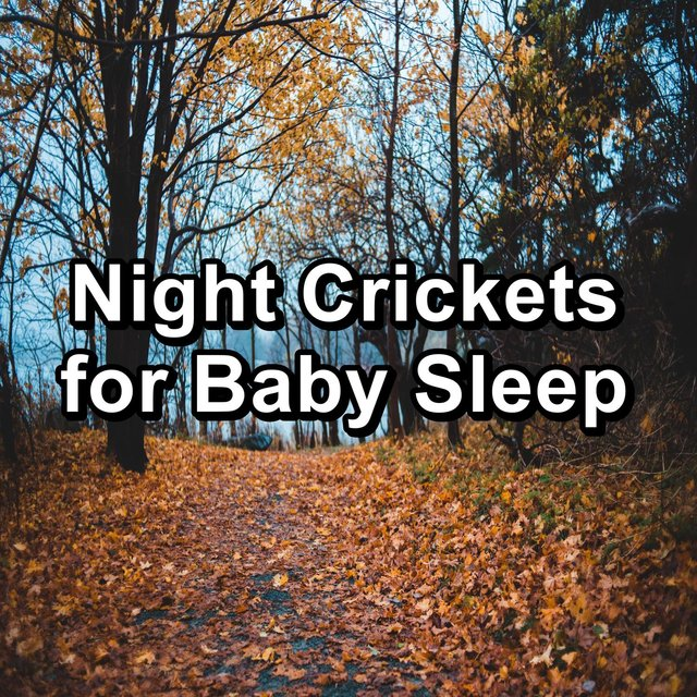 Night Crickets for Baby Sleep