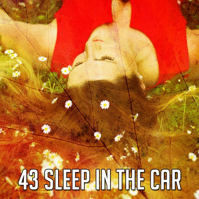 43 Sleep in the Car