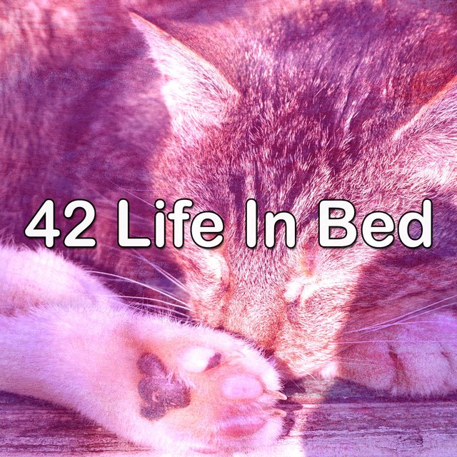 42 Life In Bed