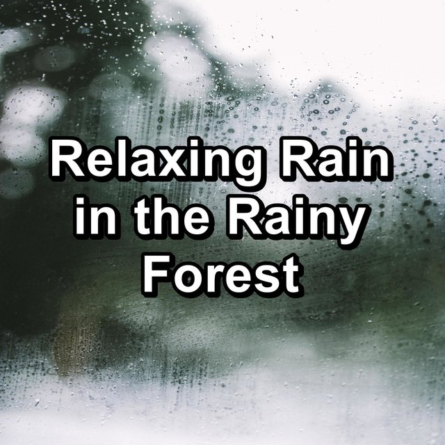 Relaxing Rain in the Rainy Forest