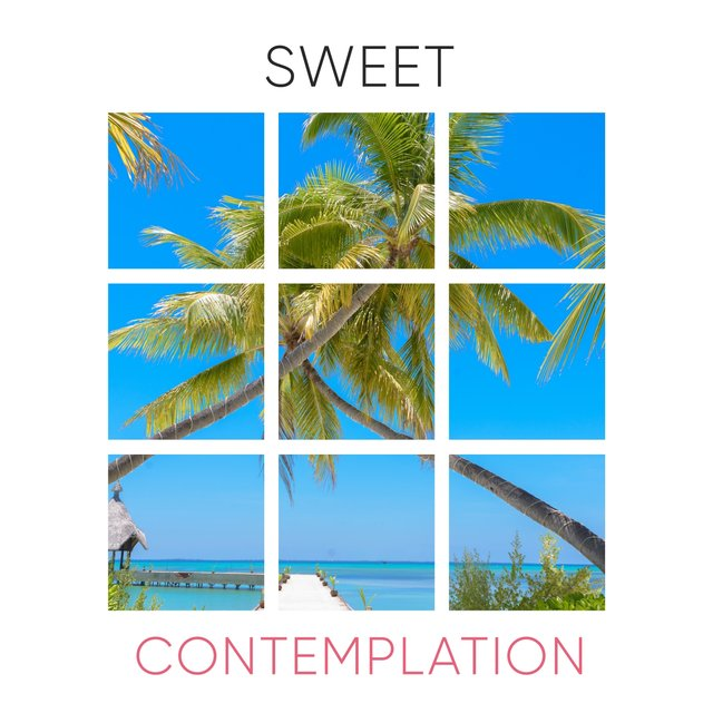 # 1 Album: Sweet Contemplation