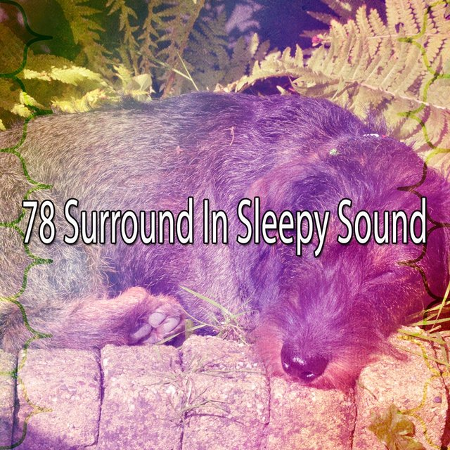 78 Surround in Sleepy Sound