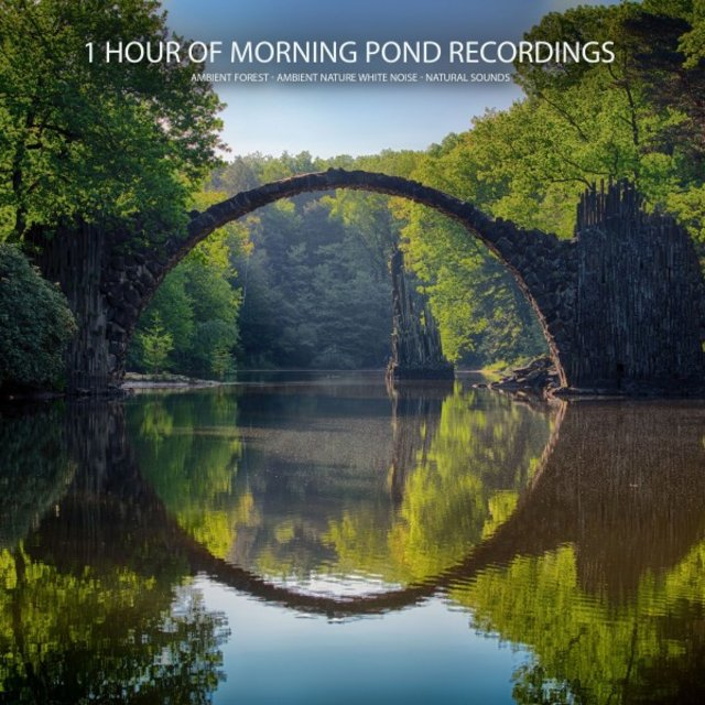 1 Hour of Morning Pond Recordings