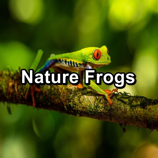 Nature Frogs