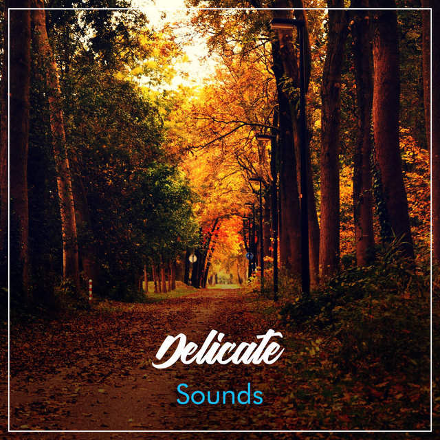 #5 Delicate Sounds for Relaxing Meditation & Yoga