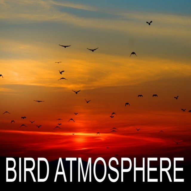 Bird Atmosphere