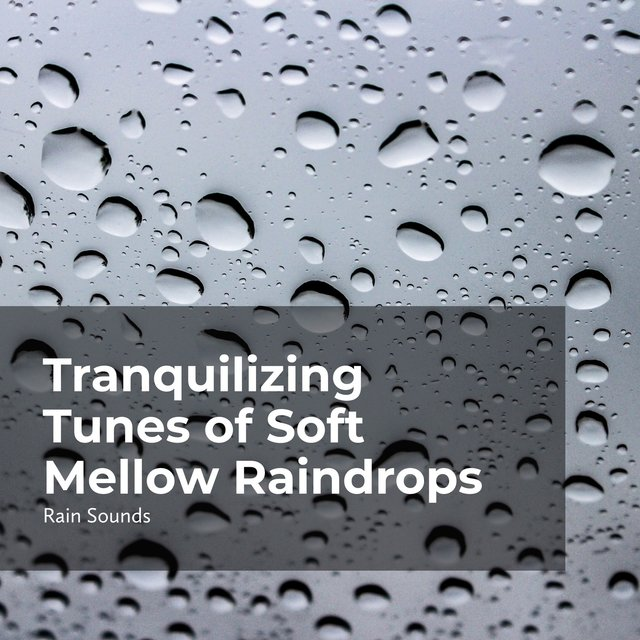 Tranquilizing Tunes of Soft Mellow Raindrops
