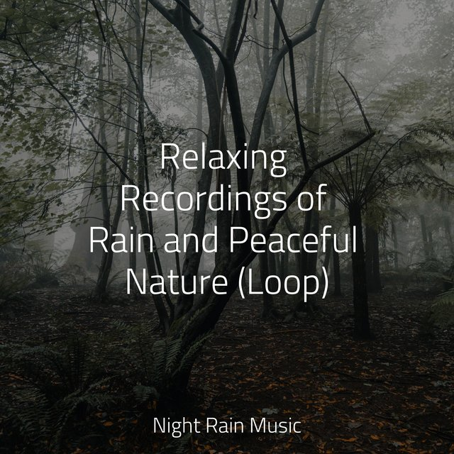Relaxing Recordings of Rain and Peaceful Nature (Loop)