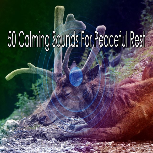 50 Calming Sounds for Peaceful Rest