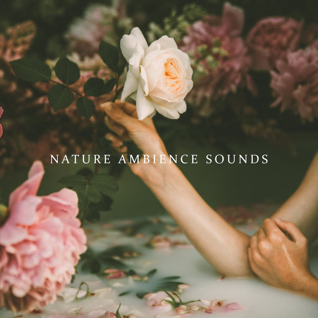 Nature Ambience Sounds for Spa, Wellness, Sauna and Bath