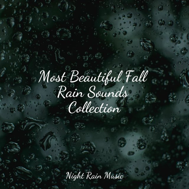 Most Beautiful Fall Rain Sounds Collection