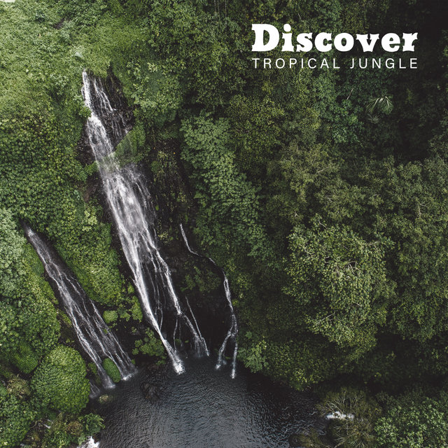 Discover Tropical Jungle - Collection of Unique Nature Sounds, Exotic Animals, Rainforest, Ocean Waves, Pouring Rain, Feel Better with Amazing New Age Music