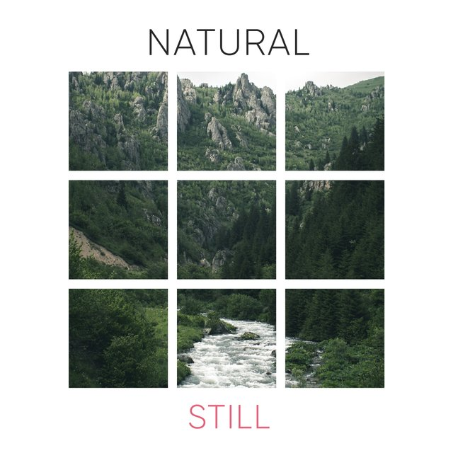 # 1 Album: Natural Still