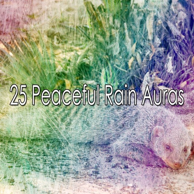 25 Peaceful Rain Auras